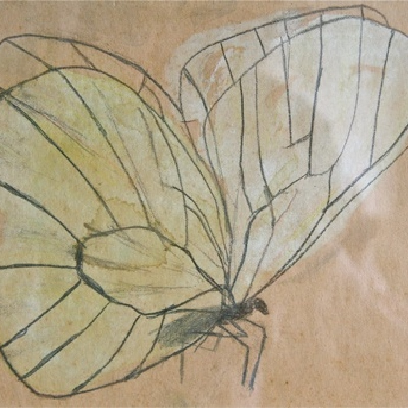Mary Newcomb, Cabbage White, watercolour